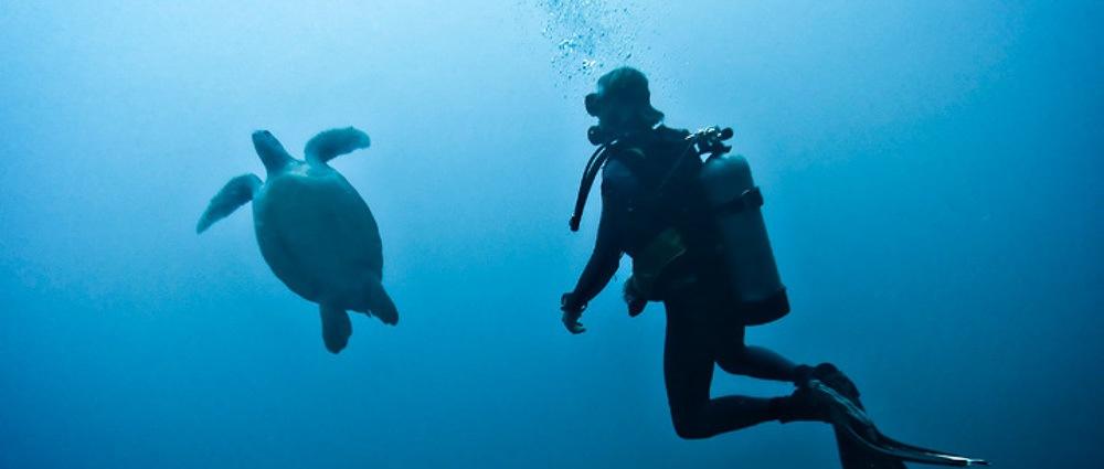The Complete Diving Guide to Gili Trawangan thumbnail