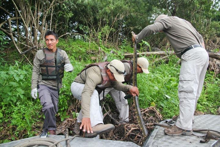 Anaconda Spotting in the Amazon