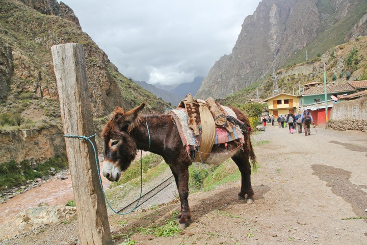 Mule on the Inca Trail