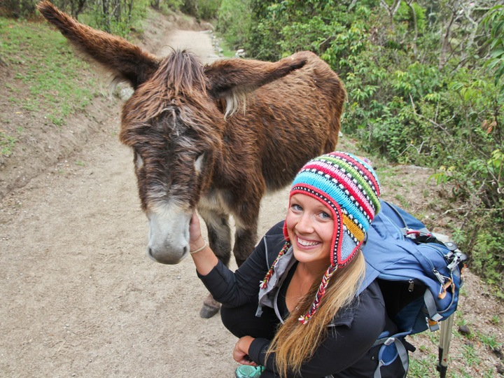 A Mule on the Inca Trail