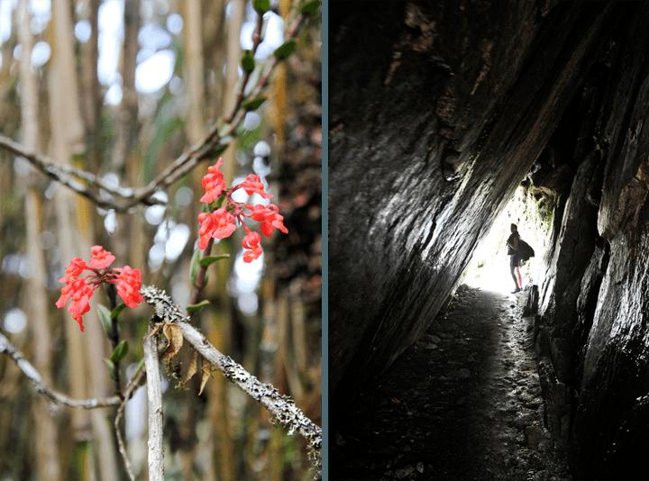 Flora along the Inca Trail