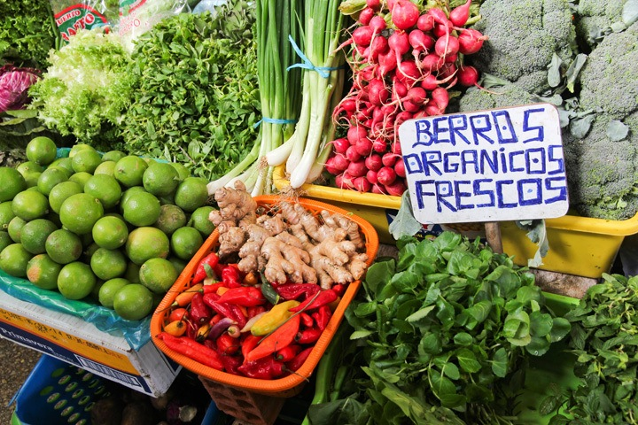 Pisco Sour Lesson, Lima