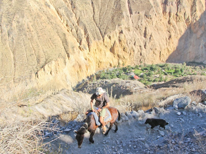 Hiking out of the Colca Canyon, Peru