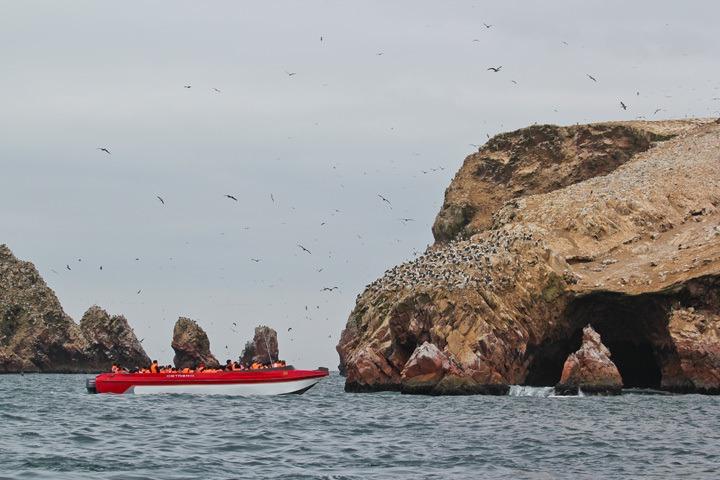 Boat Tour to The Ballestas Islands, Paracas, Peru