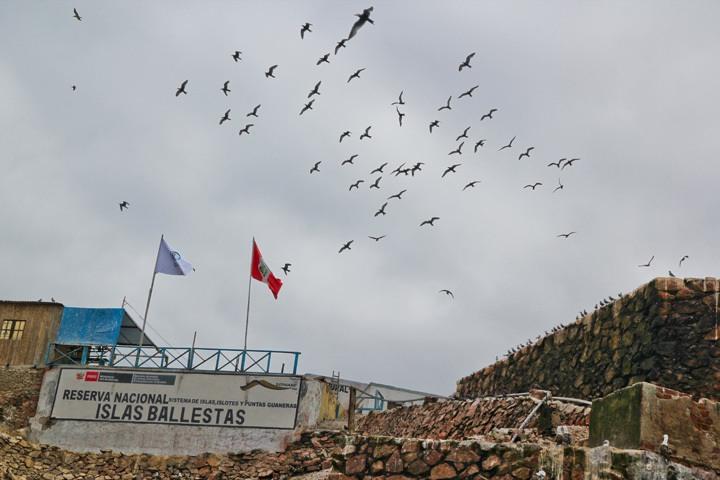 The Ballestas Islands, Paracas, Peru