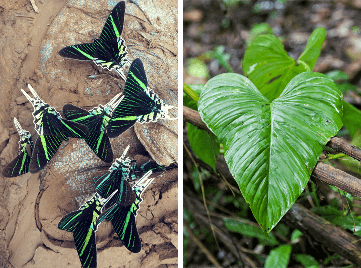 Patterns in the Tambopata National Reserve