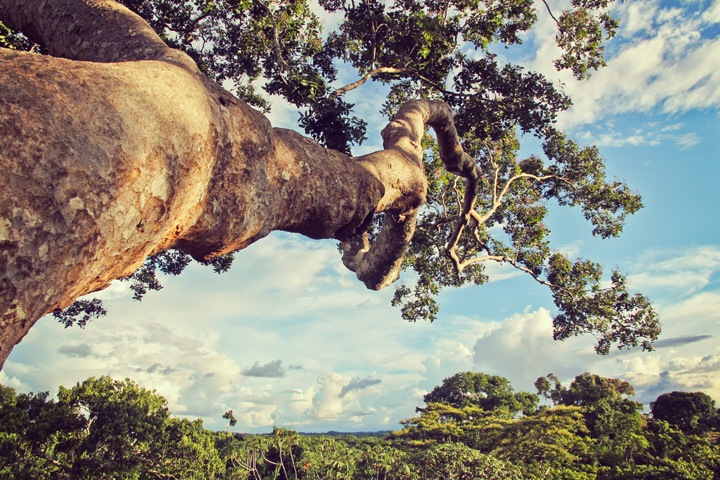 Tree Climbing at Tambopata Research Center