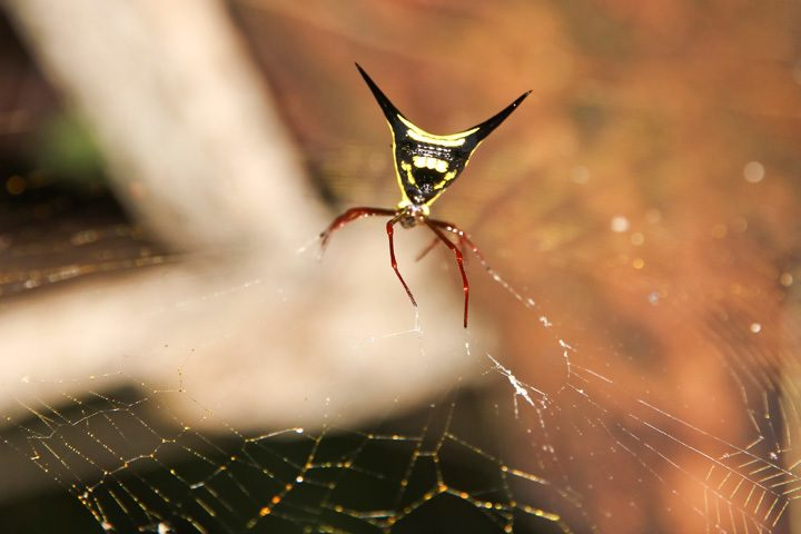Spider at Tambopata Research Center