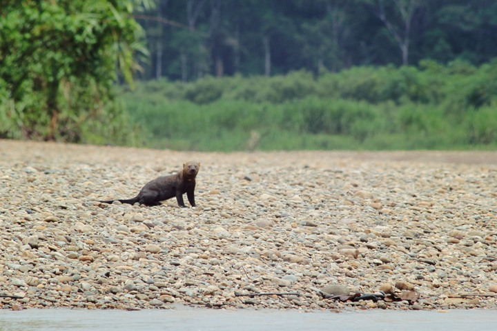 Tambopata Wildlife