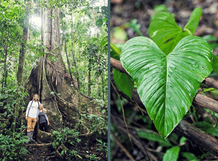 Rainforest Expeditions Excursion