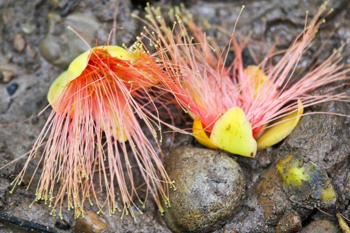 Flora in Tambopata Reserve