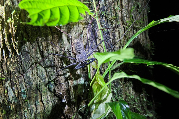 Insects in Tambopata Reserve