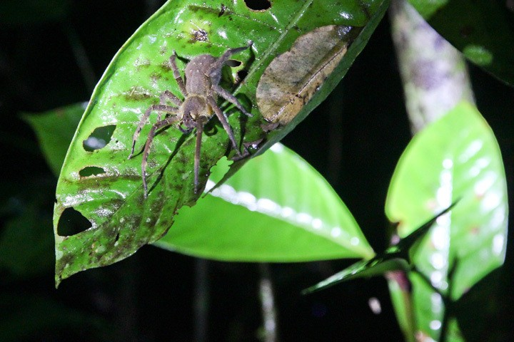 Jungle Walks with Rainforest Expeditions