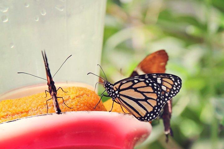 Butterfly Farm in Mindo, Ecuador