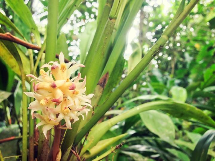 Orchid Farm in Mindo, Ecuador