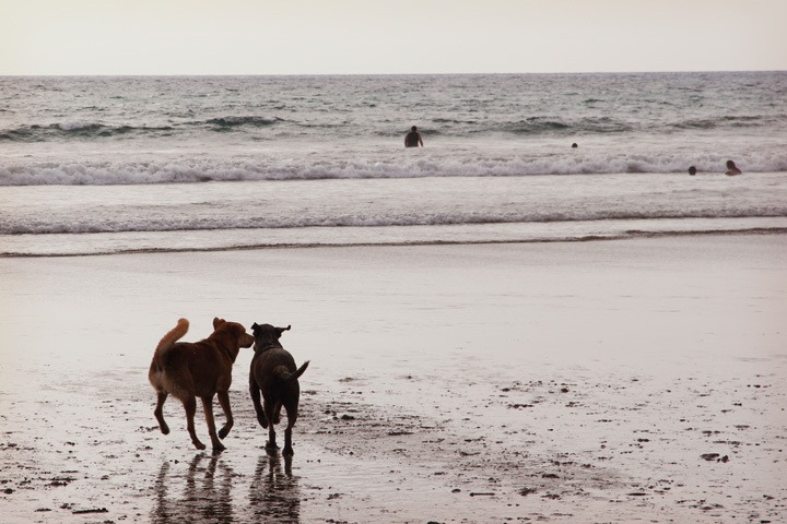 Dogs in the Beach in Montanita