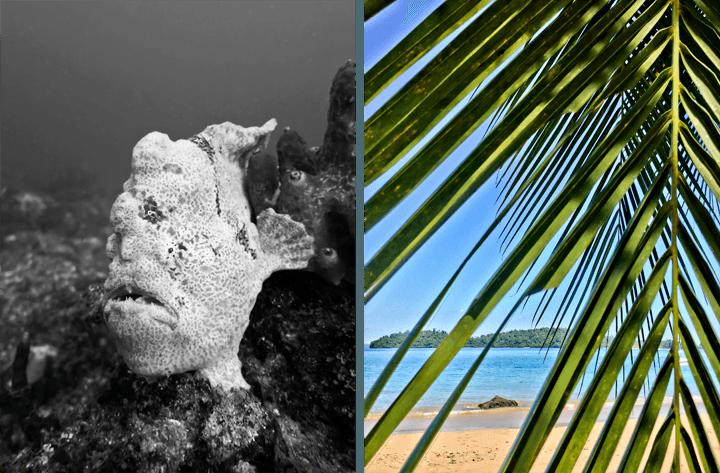 Scuba Coiba Dive Trip