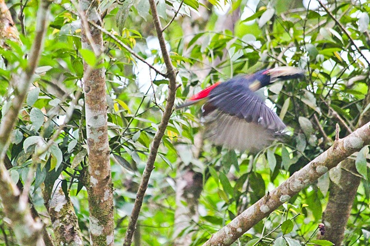Birding in El Valle