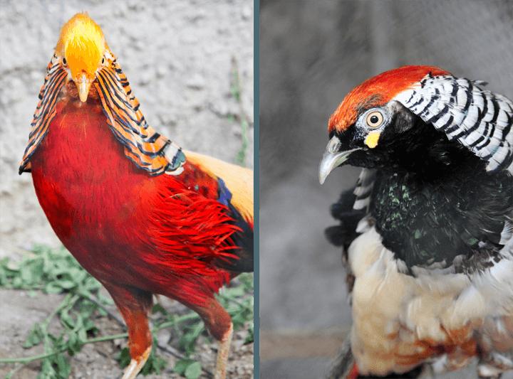 Zoo in Ecuador