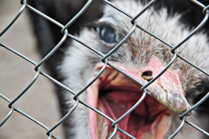 Do Animals Belong in Cages?