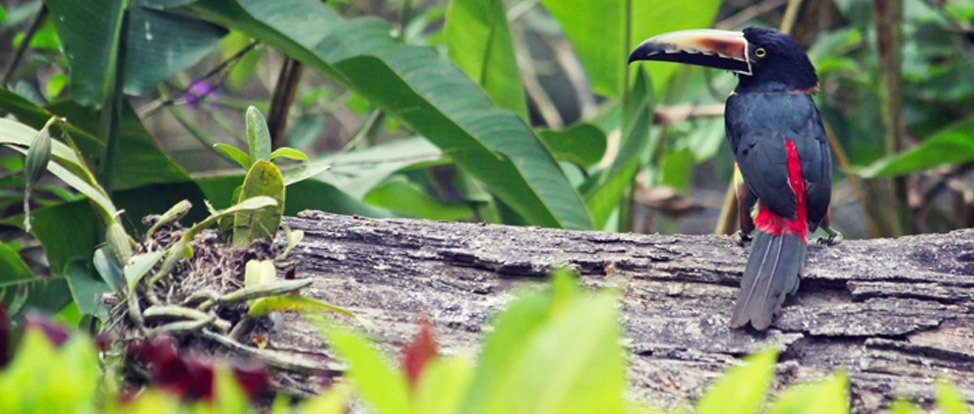 Fresh Air, Swing Jumps and Toucans in El Valle thumbnail
