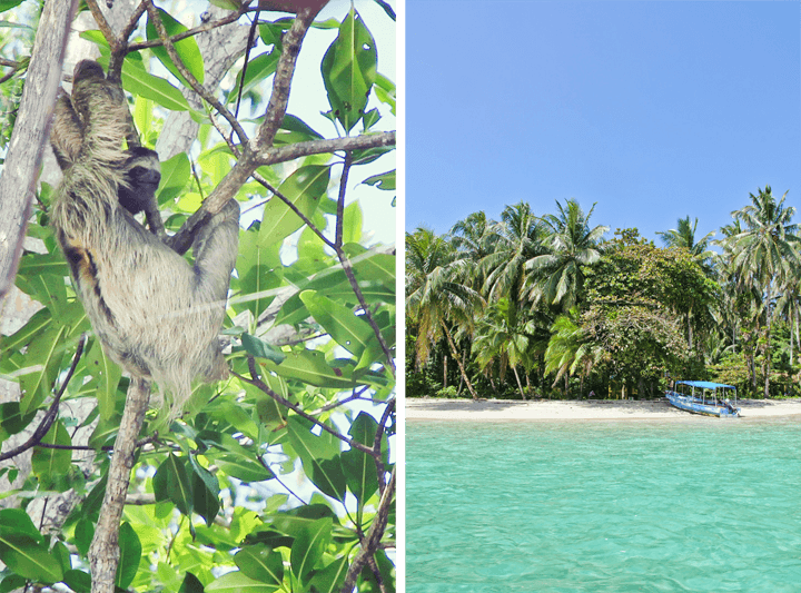 Sloth Spotting in Bocas del Toro