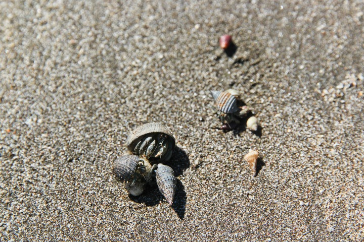 Hermit Crabs in Coiba National Park