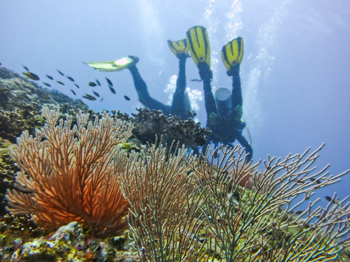 Scuba Diving in Panama