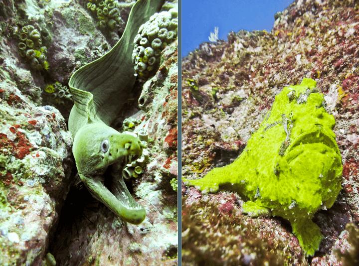 Underwater World in Panama