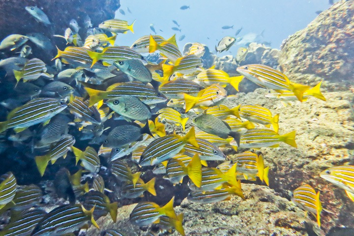 Diving in Coiba