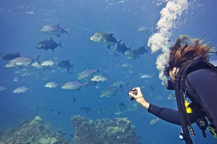 Diving in Coiba National Park