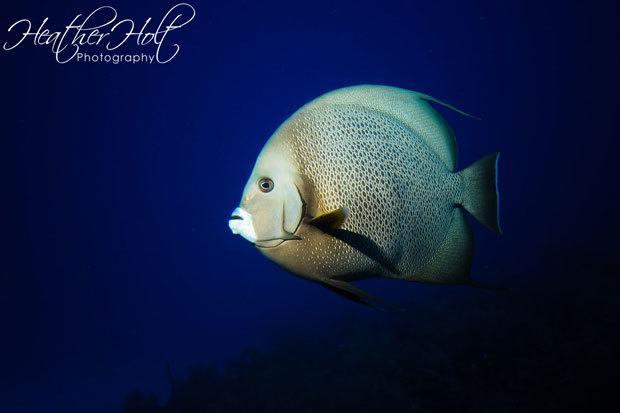 Heather Holt Photography Underwater
