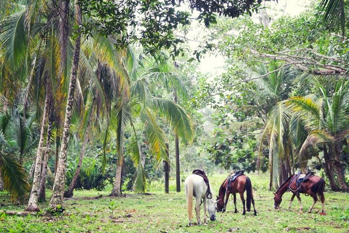 Horseback Riding in Puerto Viejo