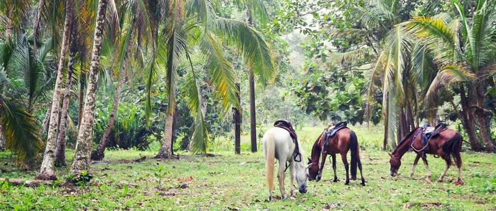 Horseback Riding the Right Way in Costa Rica thumbnail