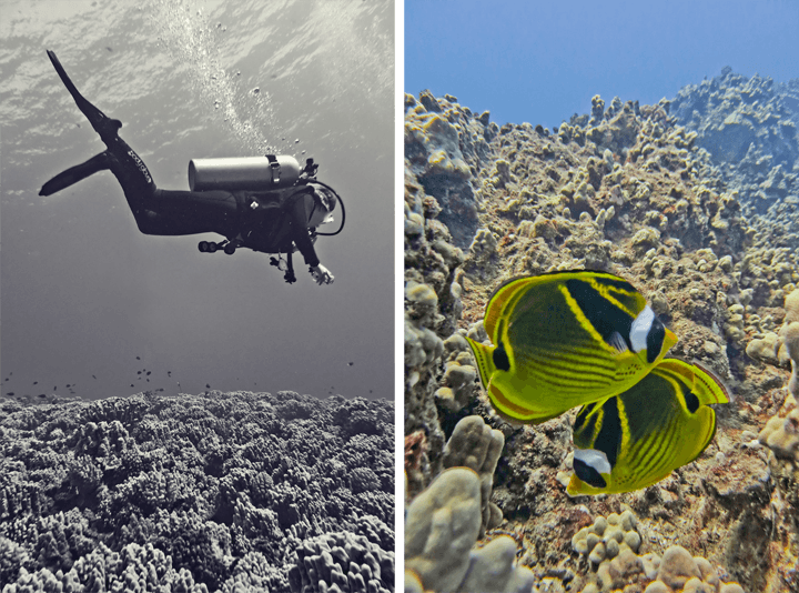 Diving Maui_18
