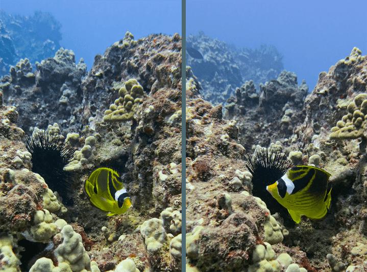 Diving Maui_19