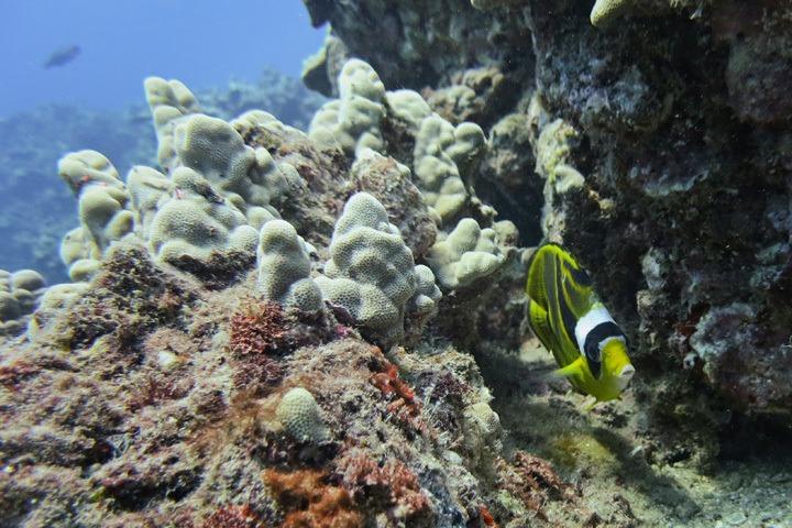 Pu'uOlai Dive Site, Maui