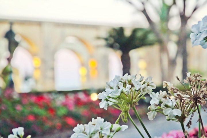 Gardens in Valleta, Malta