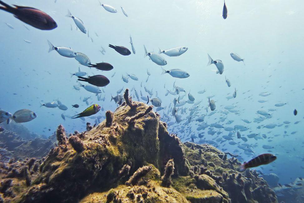 Santorini Reef Dive