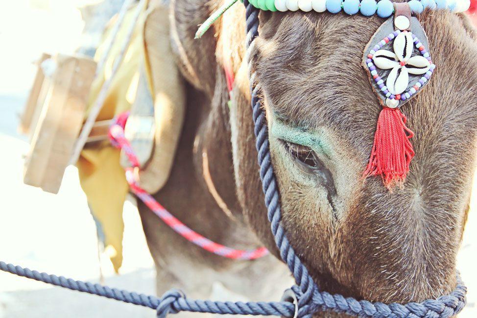 Donkey in Greece