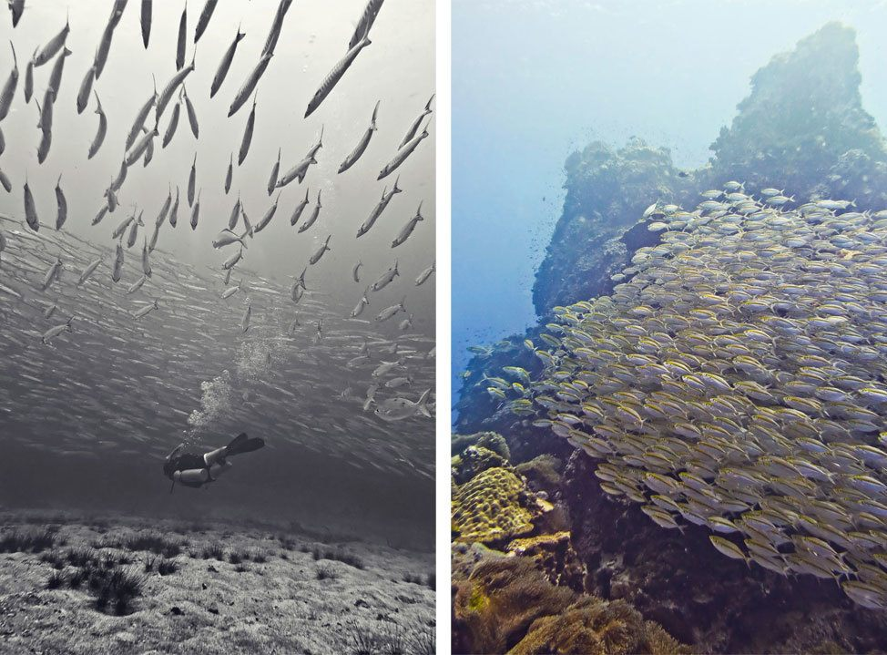Barracuda, Sail Rock