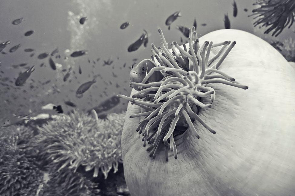 Diving Chumphon Dive Site
