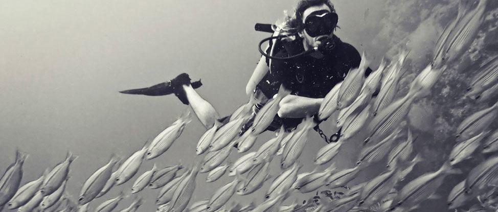 Koh Tao Dive Site Spotlight: Chumphon thumbnail