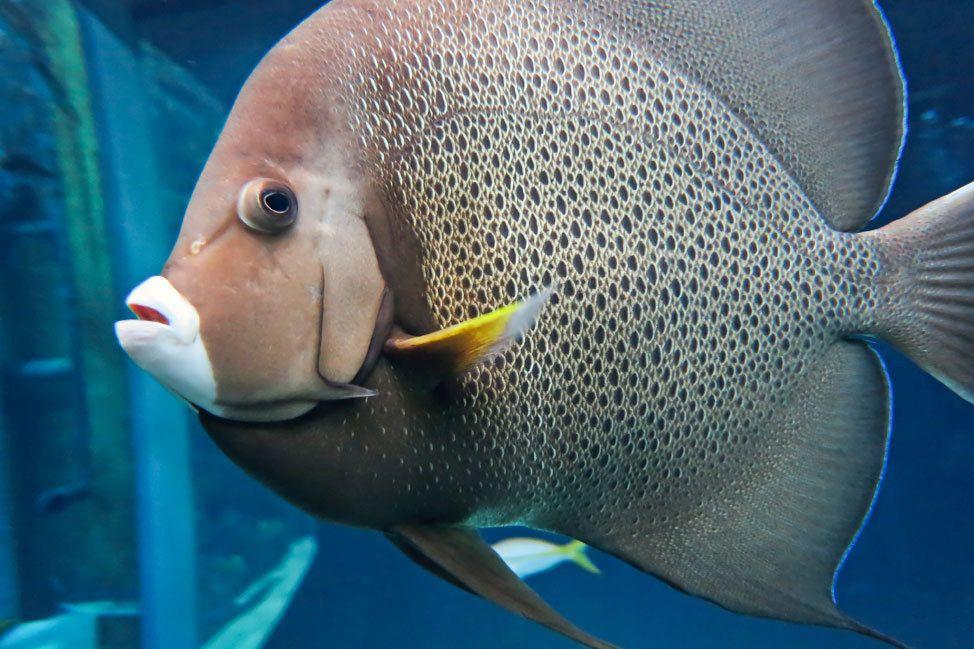 Tampa's Florida Aquarium