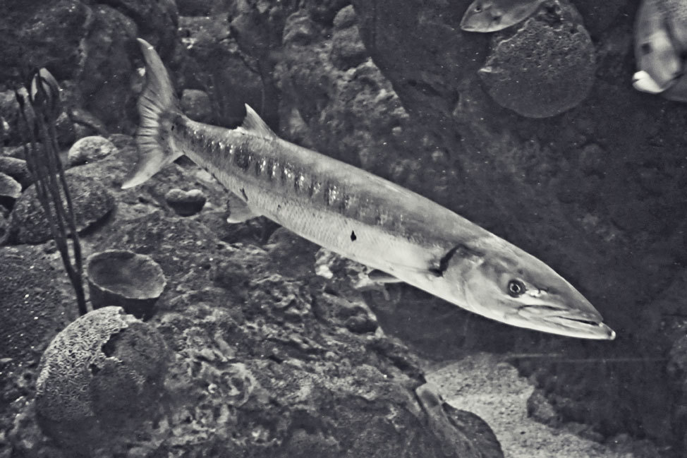 Shark Diving at the Florida Aquarium