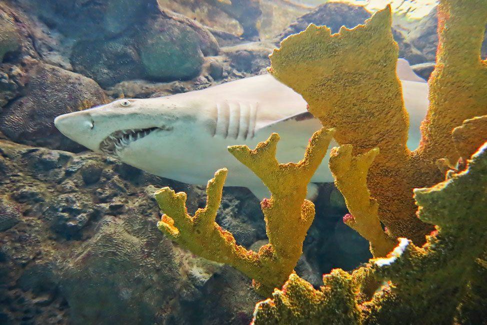 Swim With The Sharks at The Florida Aquarium