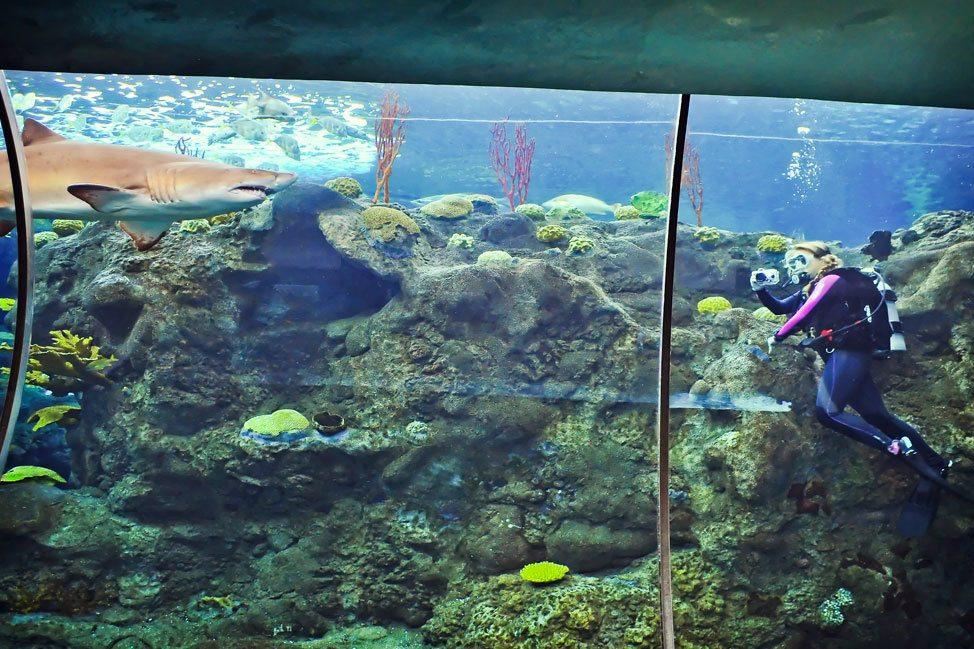 Aquarium Diving in Florida