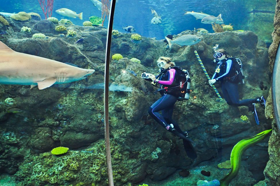 Dive With The Sharks at the Florida Aquarium