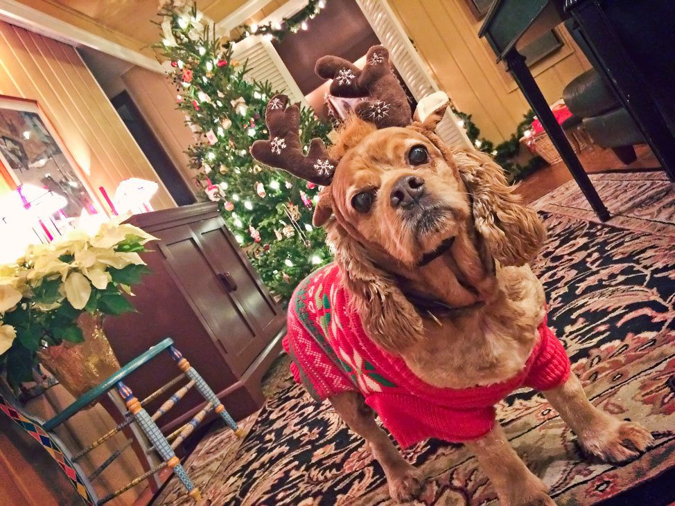 Christmas Cocker Spaniel