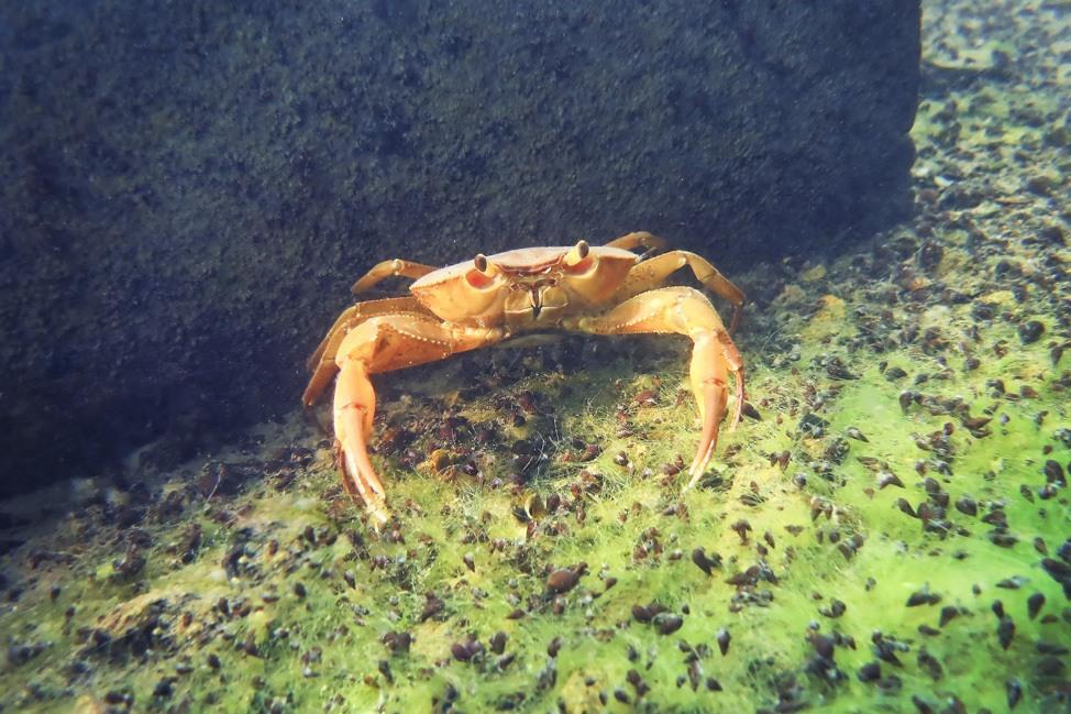 Lake Atitlan Diving